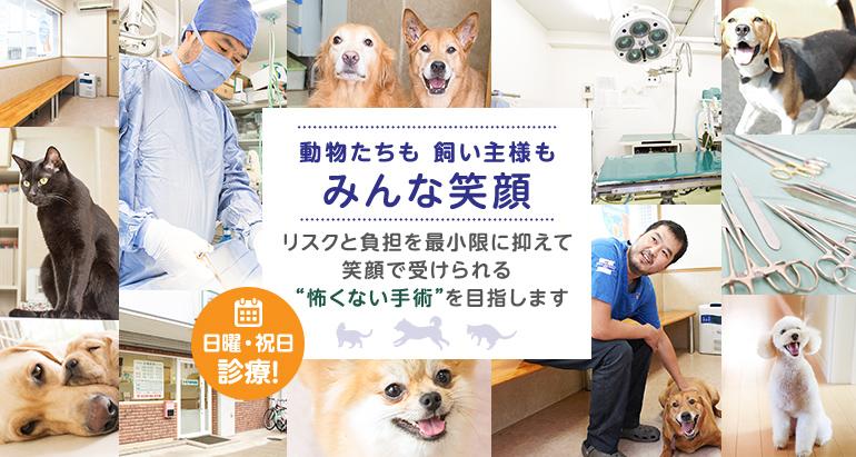 """動物たちも飼い主様もみんな笑顔 リスクと負担を最小限に抑えて笑顔で受けられる""""怖くない手術""""を目指します 日曜・祝日診療!"""