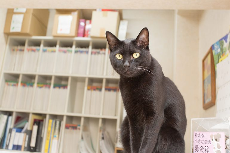猫の去勢・避妊手術